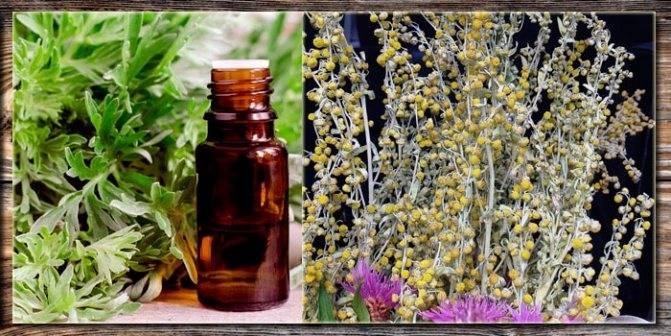 Народные рецепты из полыни от вируса папилломы