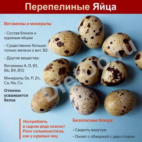 Яйцо перепелиное химический состав таблица. польза перепелиных яиц для организма человека