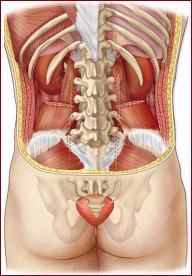 Симптомы и способы лечения нефроптоза почки