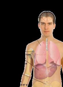 Злокачественные папилломы. может ли обычная перерасти в рак?