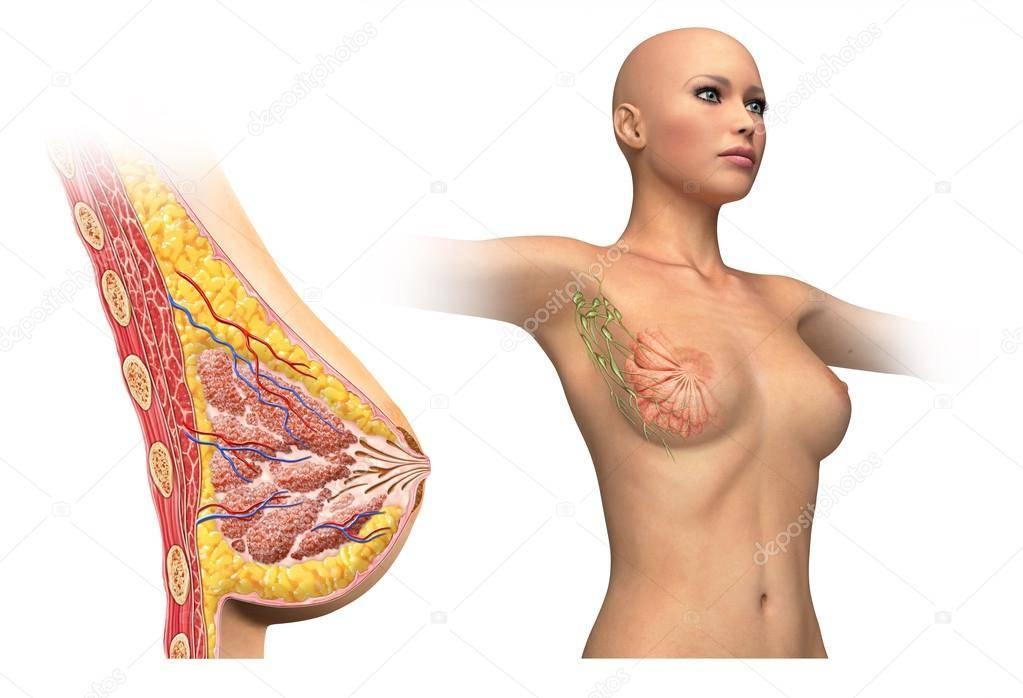 Воспаление лимфоузлов в паху у мужчин: причины, признаки и лечение