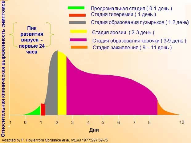 Как выглядит кожный герпес при разных типах вируса и методы его лечения