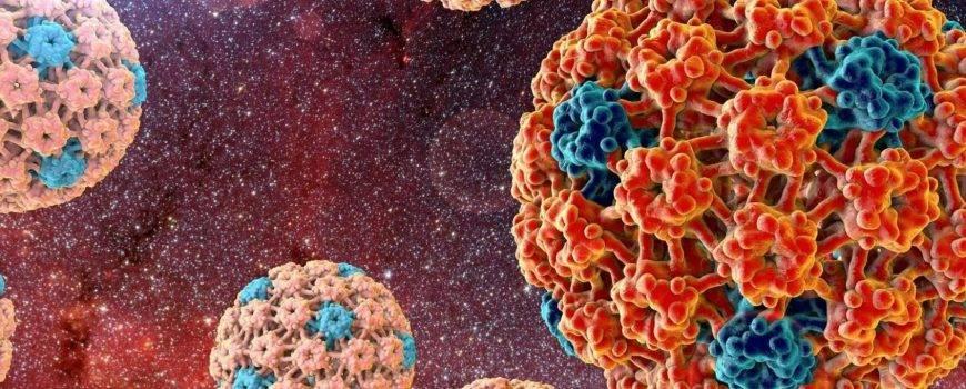 Все, что нужно знать про вирус папилломы человека