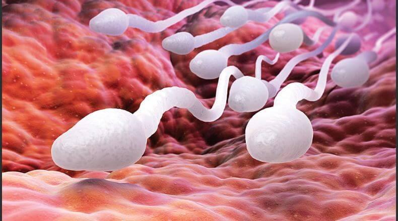 Как улучшить качество спермограммы для зачатия народными средствами?