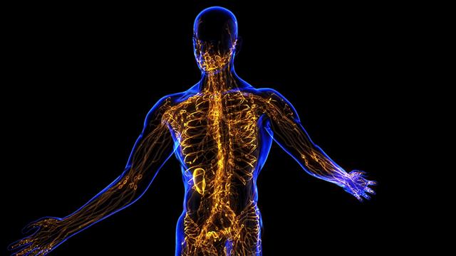 Расположение и строение лимфатических узлов у человека