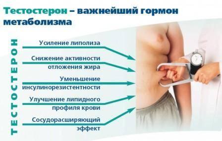 Свободный тестостерон у мужчин: норма, причины повышения и лечение