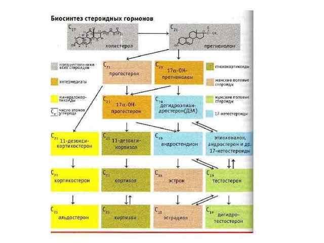 Анализ на гормоны у мужчин: расшифровка, норма