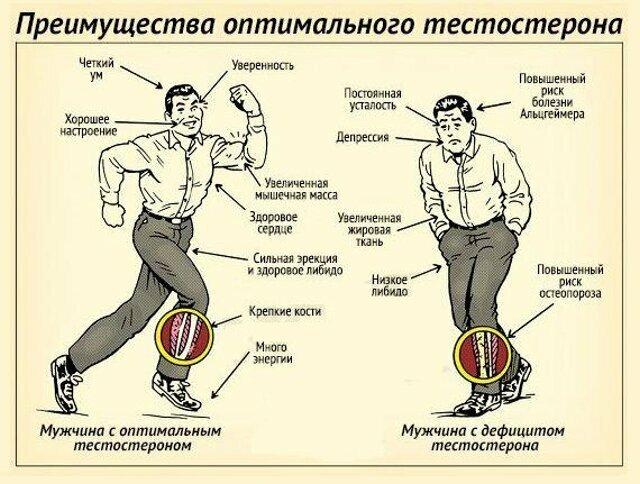 Внимание! продукты понижающие тестостерон