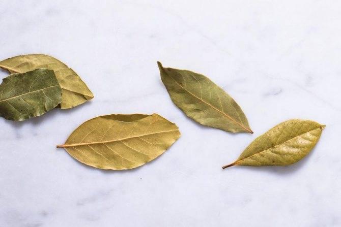Рецепты домашнего лосьона из лаврового листа, эффективного против прыщей
