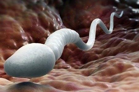 Как забеременеть быстро если малоподвижные спермики. от чего увеличивается количество малоподвижных сперматозоидов? почему сперматозоиды становятся малоподвижными