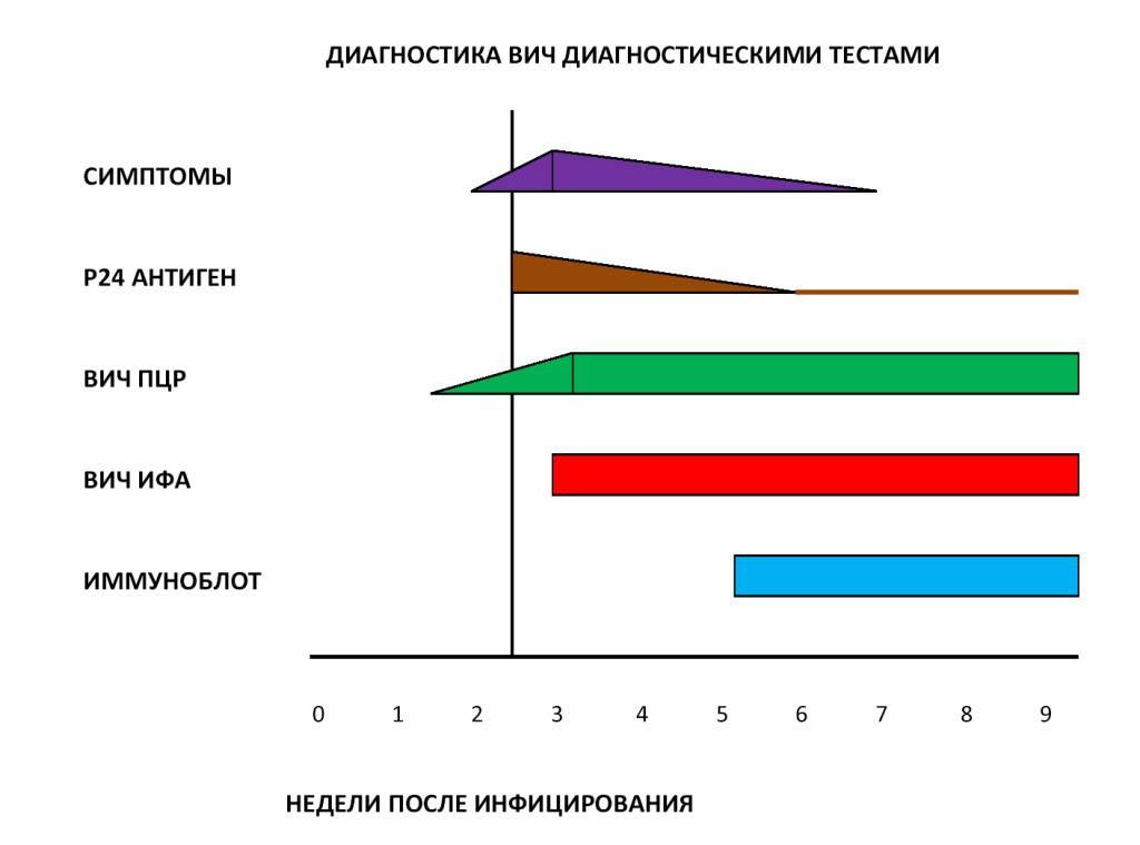 Анализ на вич: сроки готовности, где и когда сдавать