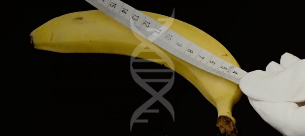 Как правильно измерить длину и диаметр члена