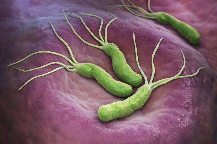 Бактерия хеликобактер и прыщи на лице – в чем взаимосвязь и что с ними делать