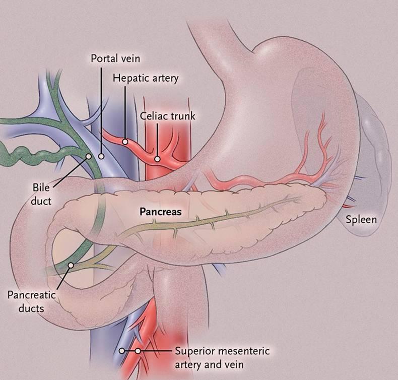 Красные точки на теле у женщин, мужчин и детей: что это такое, виды сыпи