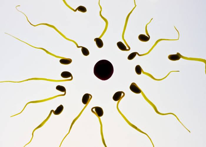 Лучшие способы повышения подвижности сперматозоидов