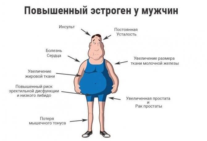 Эстрогены у мужчин как понизить эстроген sportwiki энциклопедия