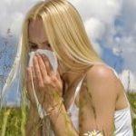амброзия и аллергия