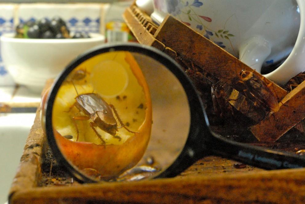Как избавиться от тараканов: профессиональные средства