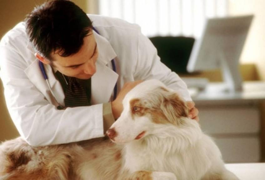 Когда нужно идти к ветеринару