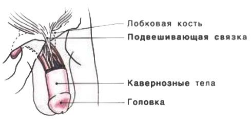 Увеличение члена без операции