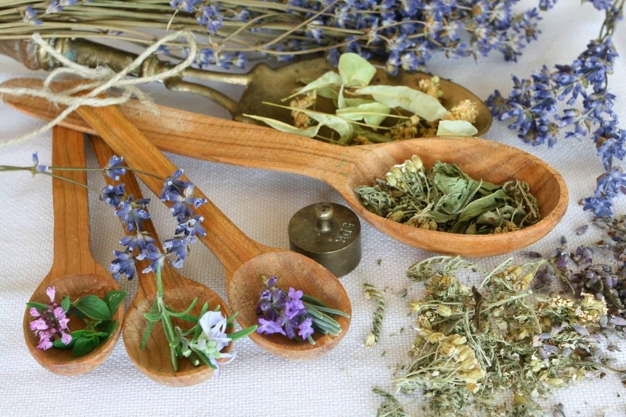 Как вылечить гонорею травами