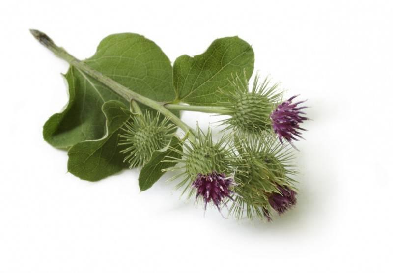 Gyógynövények ronkók a prosztatitisből
