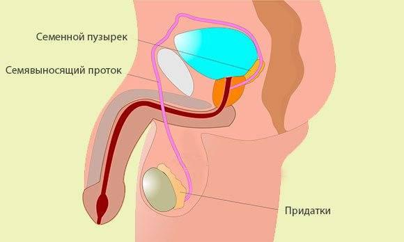 Оргазм есть, но нет спермы: почему пропала семенная жидкость?