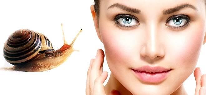 Улиткотерапия — новая процедура в мире косметологии