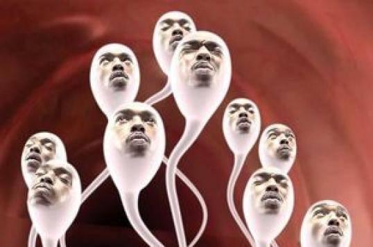 Качество мужского семени зависит от активности сперматозоидов