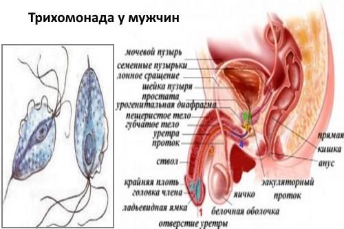 Мазок на гонорею и другие методы диагностики триппера