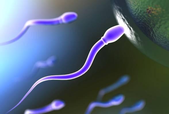 Агглютинация сперматозоидов: причины и лечение обнаруженной патологии