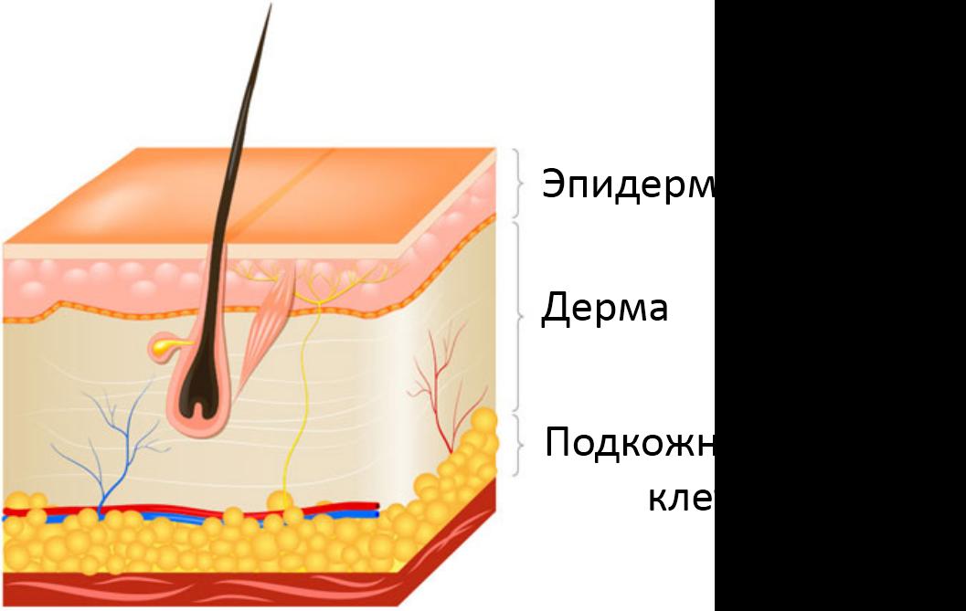 Самые эффективные мази и средства от шрамов и рубцов