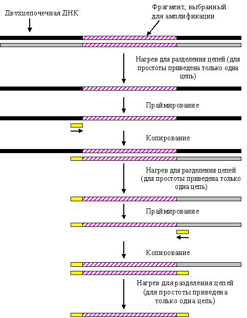 Простой мазок на коронавирус: что нужно знать больному