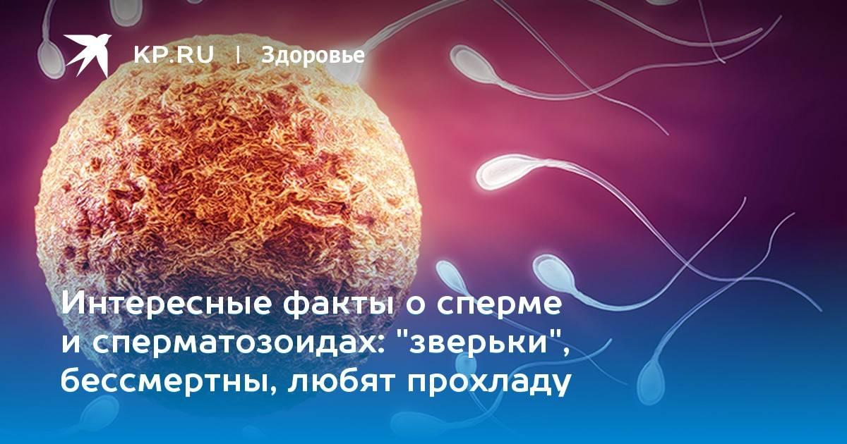 Биологический и химический состав спермы