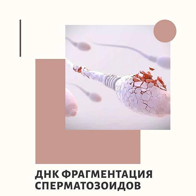 Что значит заключение врача нормозооспермия с агрегацией и агглютинацией и как лечить это заболевание