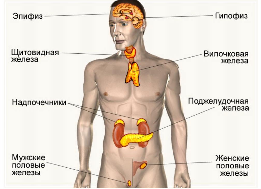 Анализ на тестостерон: норма и расшифровка