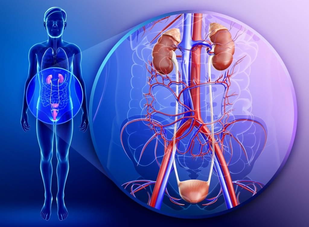 Боль в паху слева у мужчин: причины и лечение
