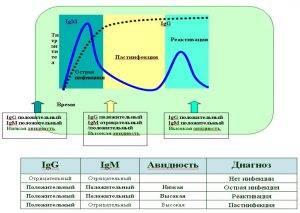 Torch-комплекс и его диагностика: какие болезни входят, риски, анализы, как расшифровать?
