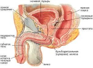 Инфекция мочевыводящих путей у мужчин: основные симптомы и методы лечения