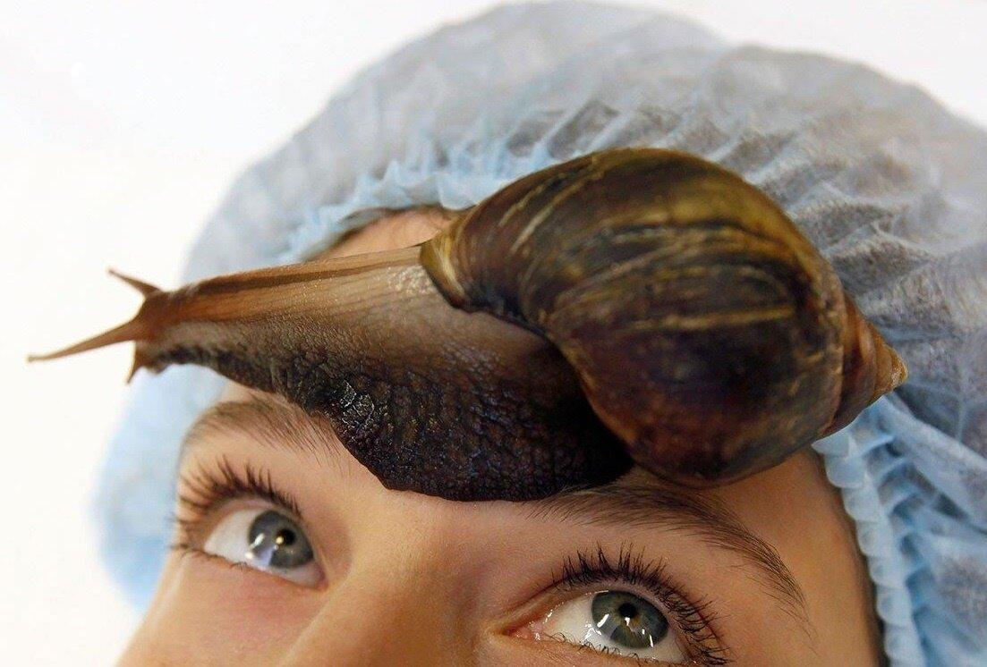 Улиткотерапия что такое: косметический массаж улитками ахатинами