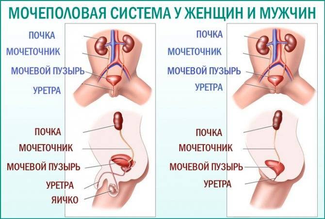 Гонорейный уретрит