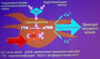 Эффективные лекарства для лечения аденомы простаты