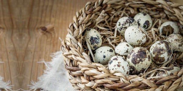 Перепелиные яйца в повседневном меню: вред и польза необычного продукта