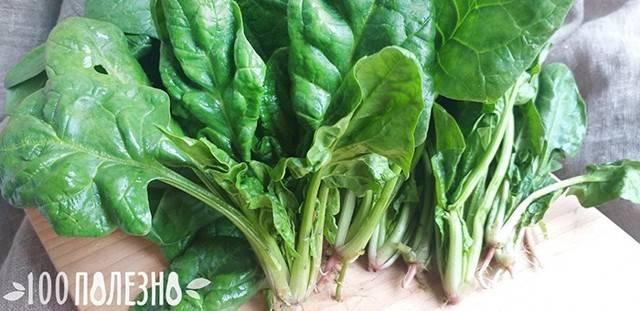 Шпинат – огородная зелень для здоровья и красоты