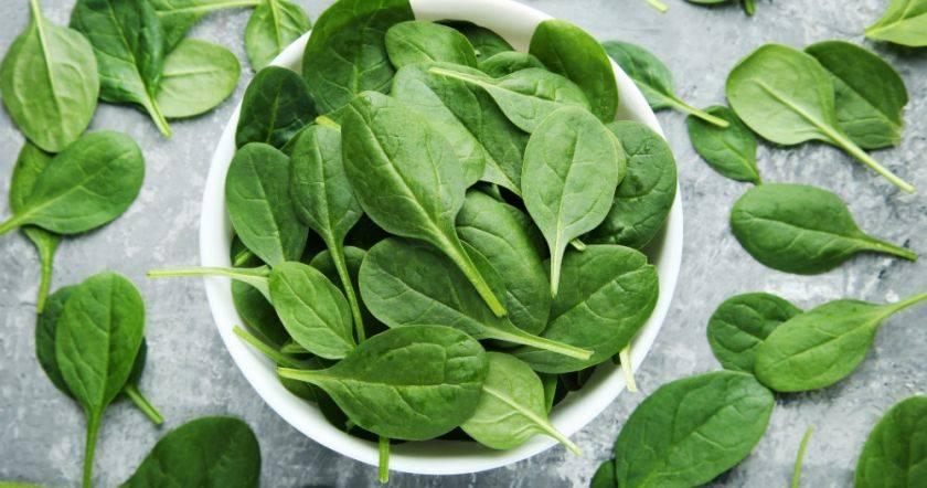 Шпинат полезные свойства и противопоказания для мужчин, женщин, детей и рецепты в кулинарии