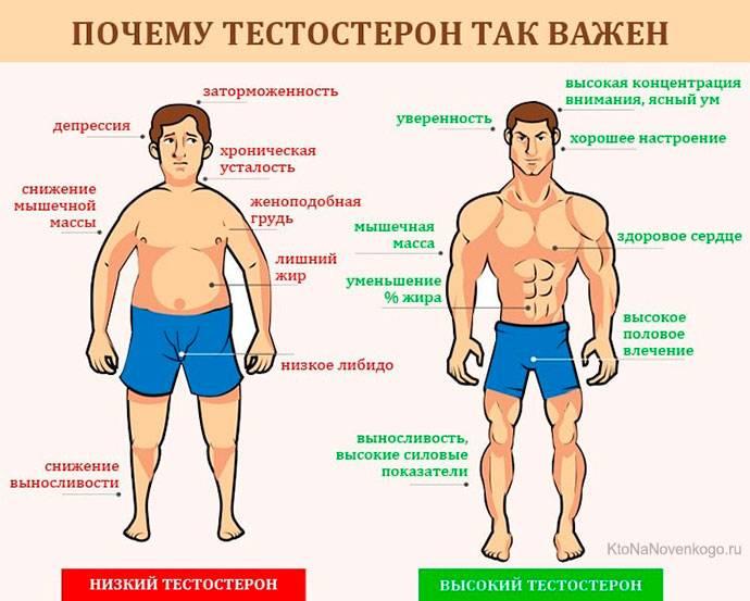 Процедура сдачи анализа на тестостерон у мужчин с расшифровкой