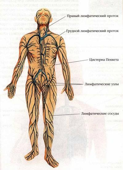 Воспаление паховых лимфоузлов у мужчин: причины, симптомы и лечение