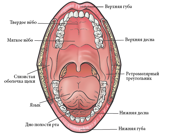 Причины, виды и лечение прыщей в ротовой полости