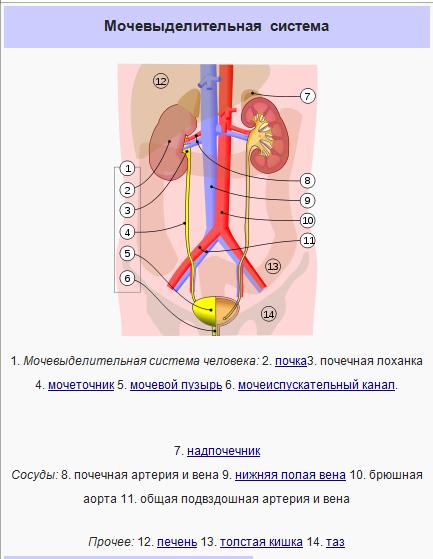 Особенности респираторного хламидиоза
