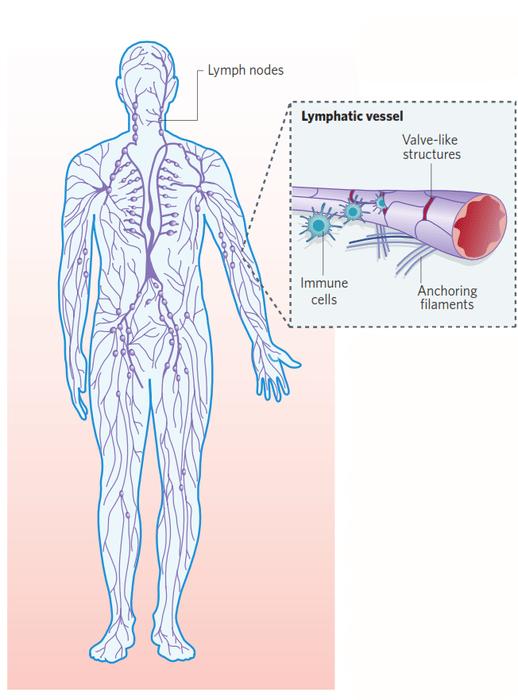 Меланома метастаз в лимфоузел прогноз
